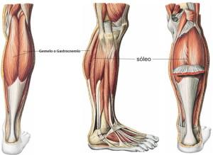 triceps sural 640x480 300x219 - triceps-sural-640x480